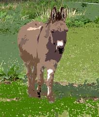 Little Donkey (Illustrated)
