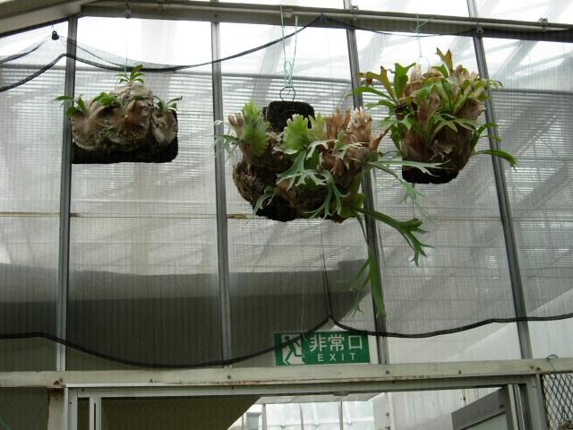 Shinjuku: Szklarnia: roślinka Uny niczym poroże
