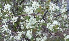 39 spring