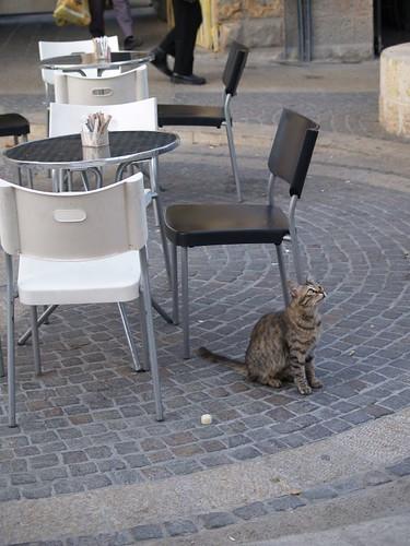 cat 75/248