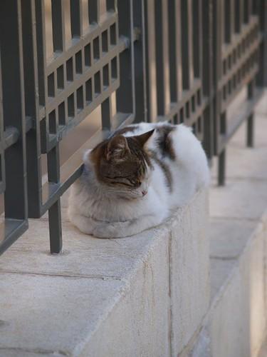 cat 86/248