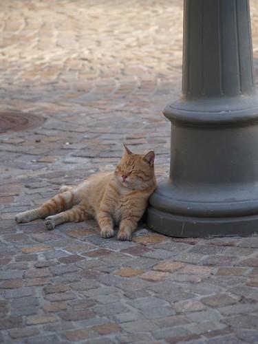 cat 87/248