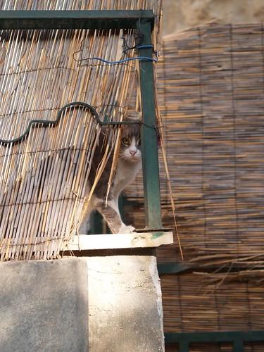 cat 124/248