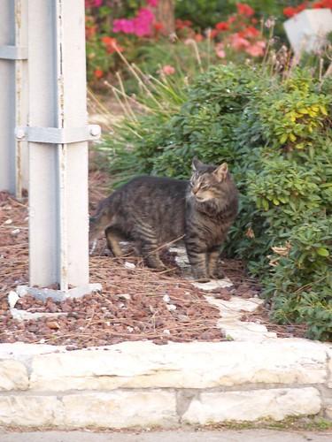 cat 139/248