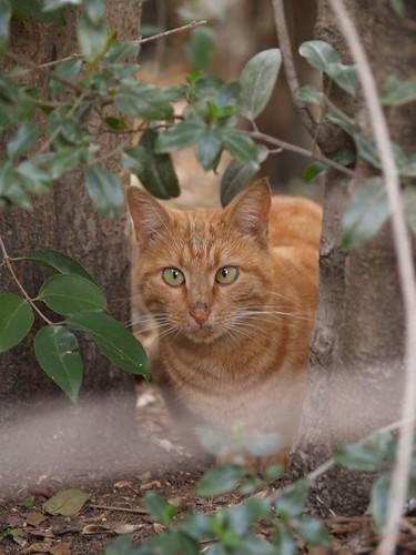 cat 148/248
