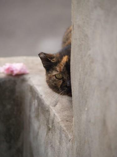 cat 151/248