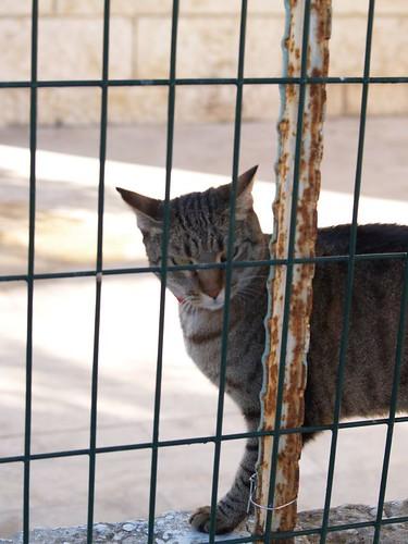 cat 163/248