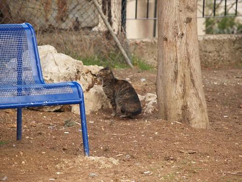 cat 162/248