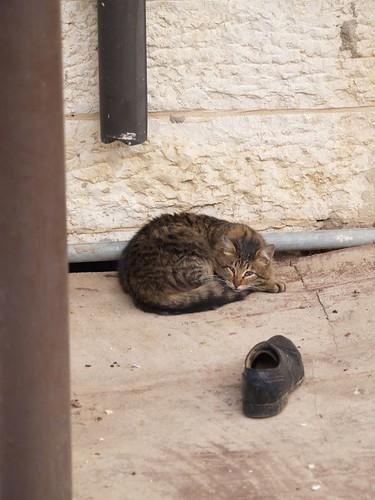 cat 160/248
