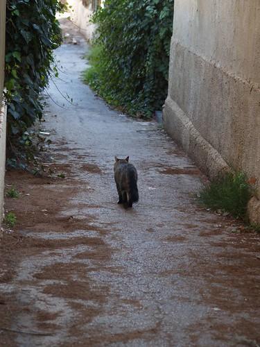 cat 167/248
