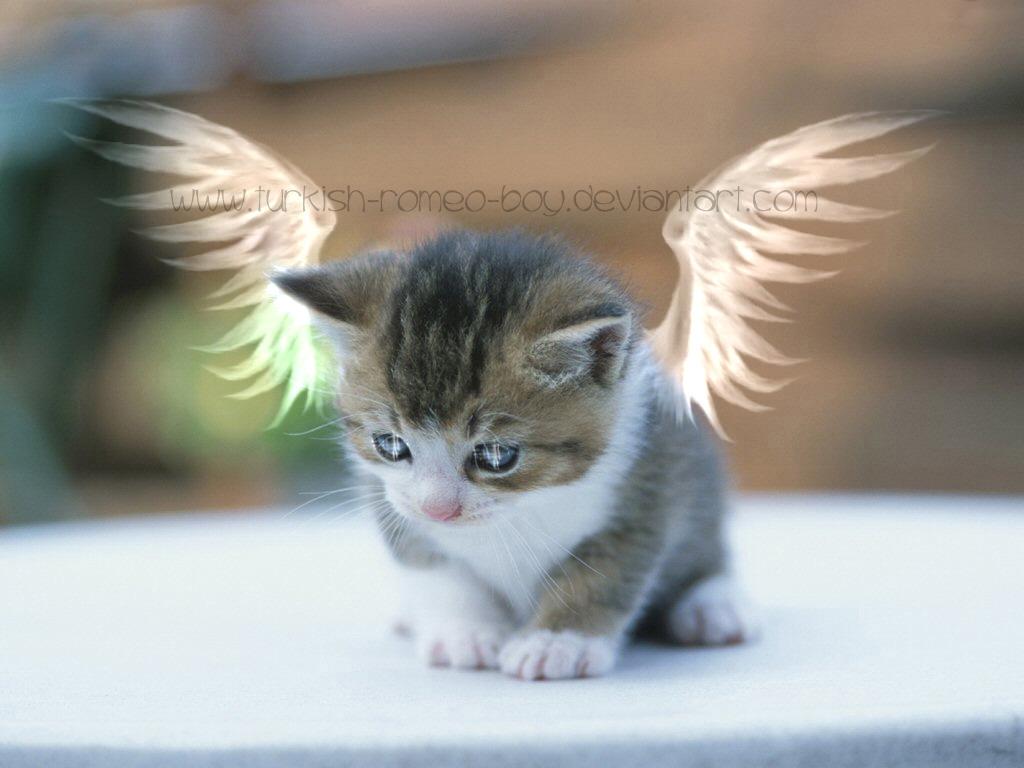 太空泥作品步骤图片小猫带翅膀