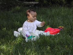 Playing in the wild, untamed meadow that we call our front lawn