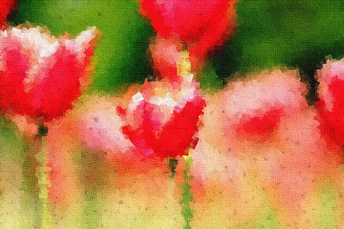 Red tulips with a cubist painting effect :)