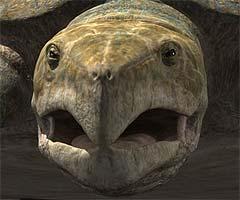 archelon face
