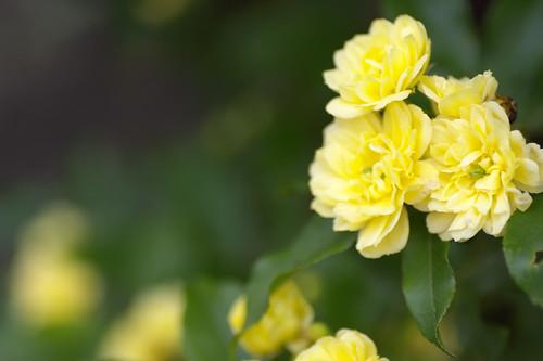 My garden's yellow.#3