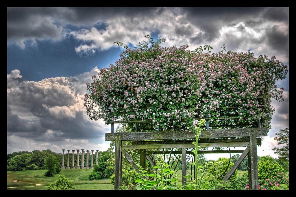 Flowered Arbor