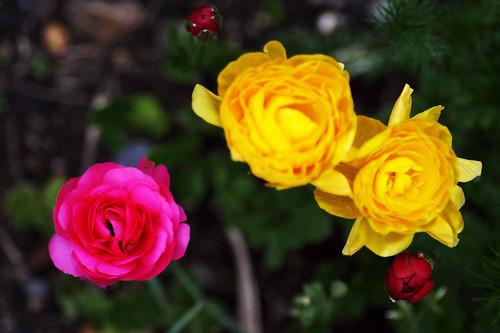 Pink yellow yellow.