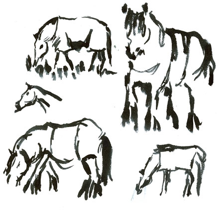 horseesincoats