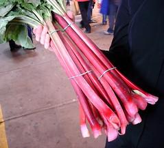 pink rhubarb, Jean-Talon Market