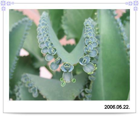 20060522Plant2