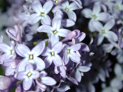 Mom's flowers4