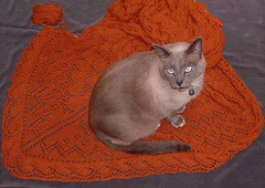 Mojo shawl