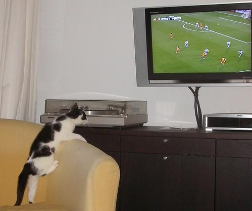 Koei en voetbal!