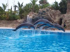 Delfines en el Loro Parque