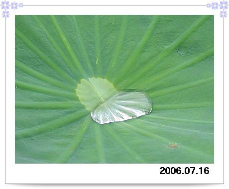 20060716Heart