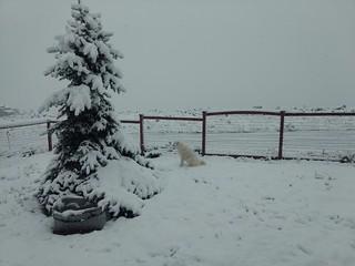 Brief winter for Mavis