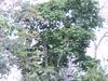 38268881481_f8f94ee82e_t