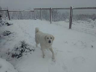 Mavis looks less white in the snow