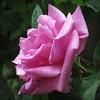 24856770838_7ee038404e_t