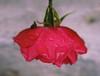 38149674274_f3ffed0ef6_t