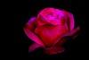 24846020638_38008b36ce_t