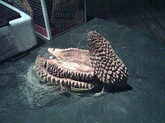 Durian Husk