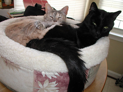obie and portia in the cuddle-cup