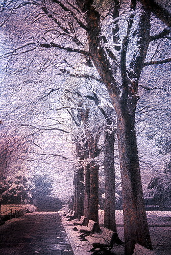In a park of a snowy day