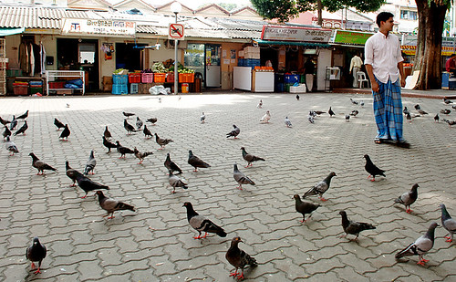 Little India - Pigeon Square