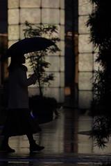 春雨夜のシルエット