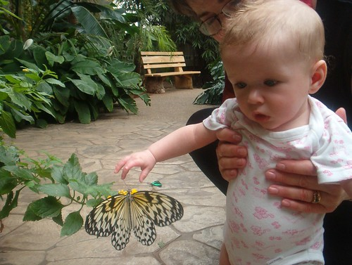 vivi and butterfly ii