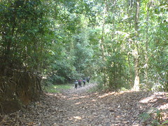 Walk amoung the trees