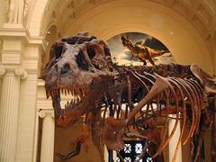 SueT-Rex