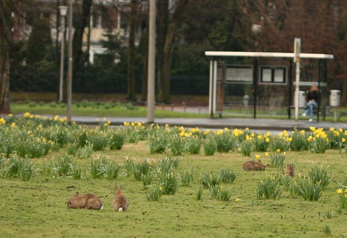 Easter bunnies on the roundabout
