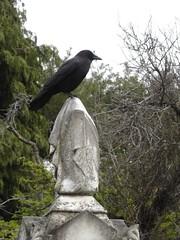 crow_gravestone