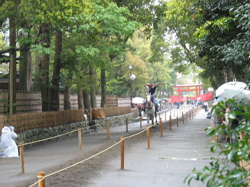 Kamakura - Japanski alkar u trku