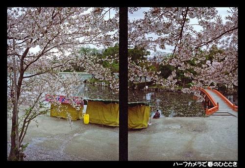 Sakura by Half style 060418 #02
