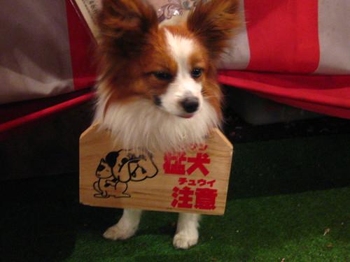beware of fierce dog