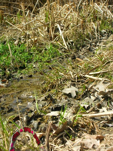 Plastic in Grass