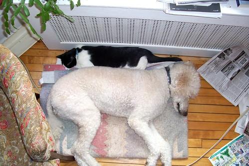 Friday Cat + Dog Blogging